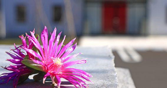 【お仕事紹介】花さか天使コイケくん
